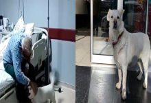 کتے کی وفاداری، ہسپتال کے باہر ایک ہفتے تک بیمار مالک کا انتظار کرتا رہا