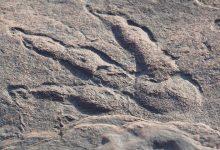 4 سالہ بچی نے 22 کروڑ سال پرانا ڈائنو سار کے پیروں کا نشان دریافت کرلیا